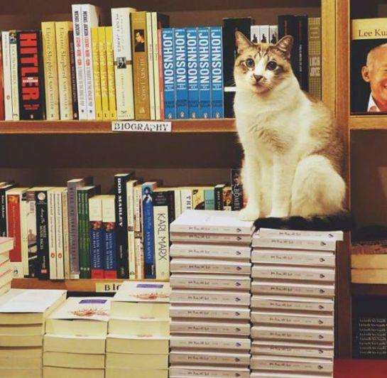 gattobooksactually